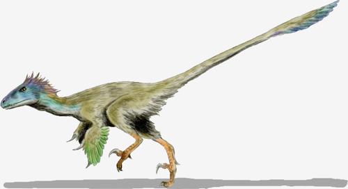 Utahraptor ostrommaysorum, drawing by Nobu Tamura